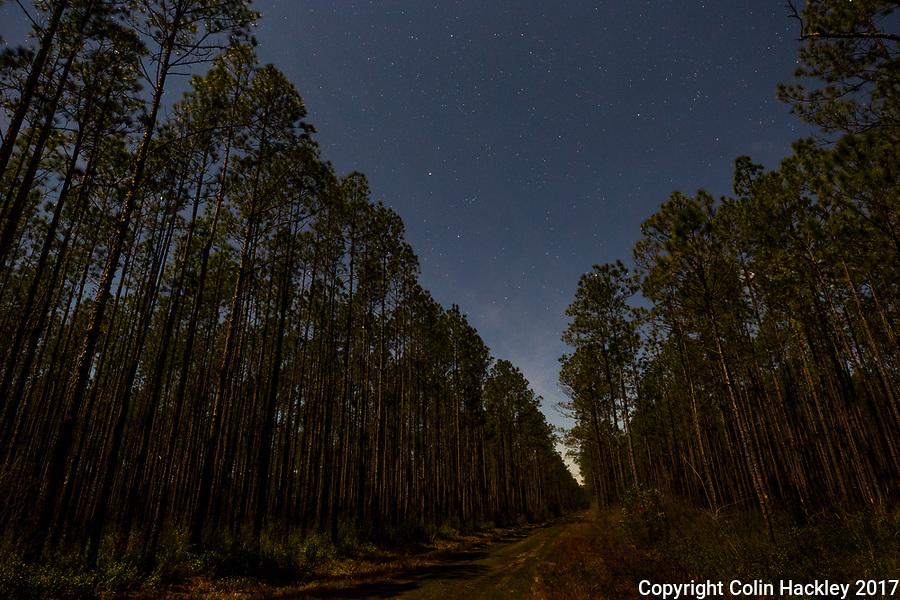 SOPCHOPPY, FLA. 3/10/17-Moonlight illuminates the pines of the Apalachicola National Forest as the stars shine above the Sopchoppy, Fla. area.<br /> <br /> <br /> COLIN HACKLEY PHOTO