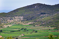 hills and vineyards