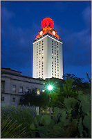 Early in the morning in Austin, Texas, I captured this image of the UT Tower from the East Mall (on the University of Texas Campus). The tower is traditionally lit when an important event occurs - in this case Texas won a football game. Just a few blocks from the Texas State Capitol and downtown Austin, the 40 acres is a great place to spend 4 or 5 years in college.