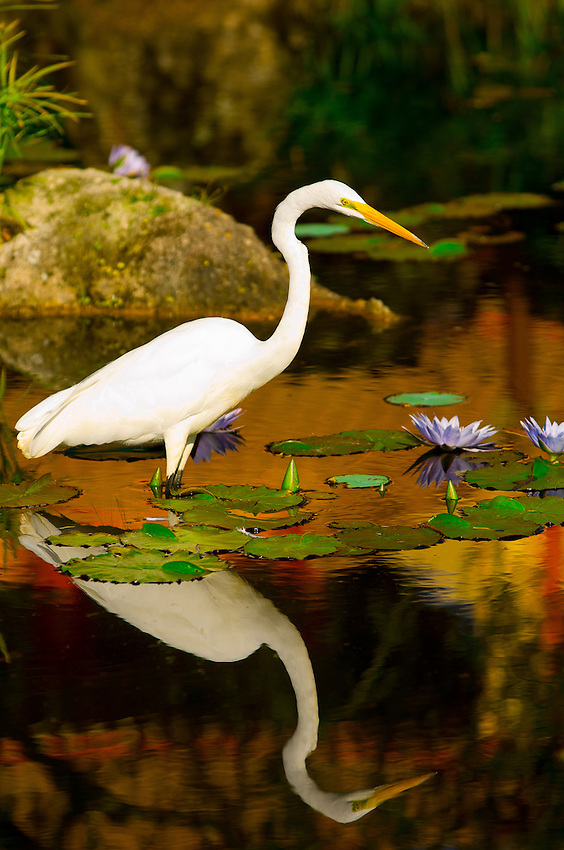Egret, China Pavilion, Epcot, Walt Disney World, Orlando, Florida