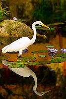 Egret, China Pavilion, Epcot, Walt Disney World, Orlando, Florida