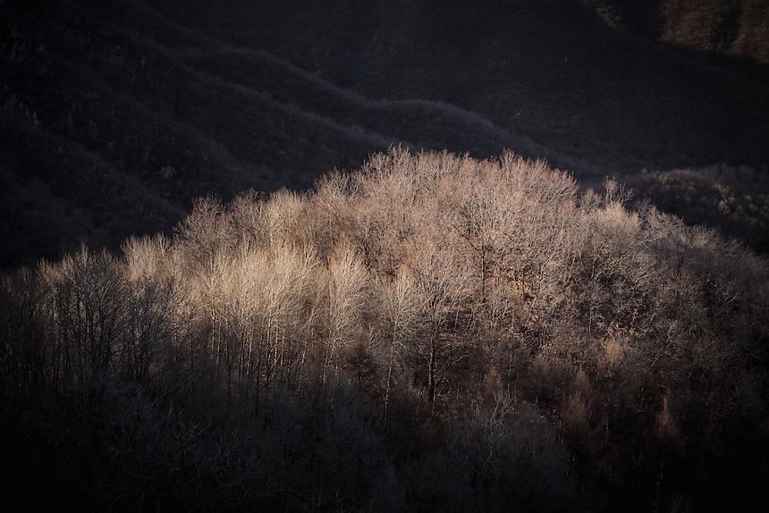Late afternoon sun illuminates the trees near Jiankou Great Wall.