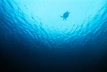 Green sea turtle, Sipidan Island, Malaysia