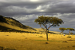 Africa, Kenya, Maasai Mara. A lone jeeps explores the Mara.