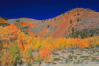 Bishop Pack Trailhead Wide View - Fall Color