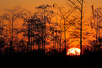 Everglades, Fla. -- Feb. 17, 2007 -- The sun sets behind the trees of the Big Cypress National Preserve just north of Everglades National Park on the southern tip of Florida on Saturday, Feb.  17, 2007.