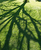 Shadows on the lawn from tree branches.