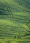 Tractor tracks on a wheat field on the hillside in Orcia Valley, Tuscany, Italy.