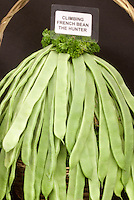 Beans 'The Hunter' (Climbing French Bean)  Phaseolus vulgaris in basket with sign label