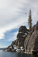 """Boulders at Lake Tahoe 37"" - This Osprey was photographed flying above boulders along the West shore of Lake Tahoe."