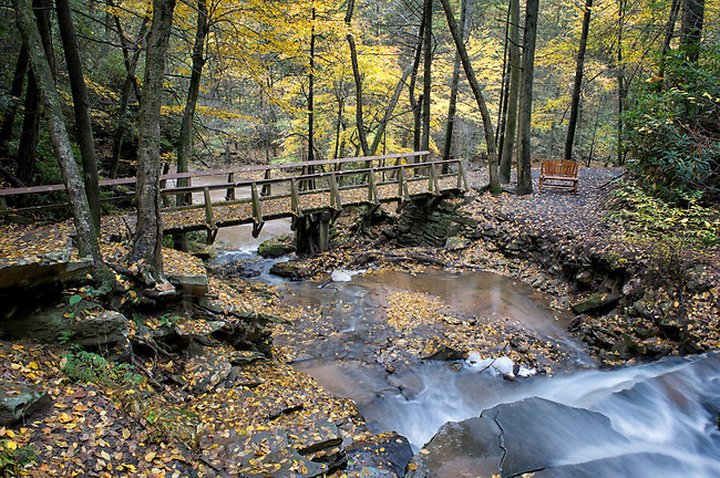 Bridge across flowing stream in fall forest of yellow leaves, waterfall going over the edge in foreground and bench for viewing nearby.