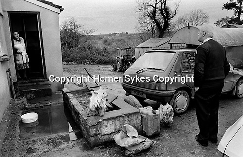 Puppy Farming Wales 1989.A Welsh hill farm and two Westie's
