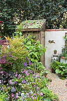 Rustic garden old outbuilding outhouse shed with rooftop sempervivum and sedum plantings garden, and wall , Primula vialii, Lychnis flos-culii, watering can, shrubs for pretty garden scene with charm and old-fashioned farm feel