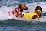 3rd Annual Surf Dog Competition and Fundraiser at Del Mar Dog Beach, California.