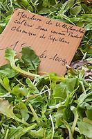 Europe/France/Provence-Alpes-Côte d'Azur/Alpes-Maritimes/Nice:  Mesclun bio, sur le Marché Cours Saleya  //   Europe, France, Provence-Alpes-Côte d'Azur, Alpes-Maritimes, Nice:  Cours Saleya Market; organic mesclun