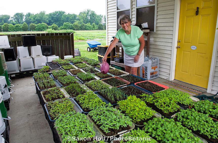 Lisa Ziegler watering annual flower seedling plugs at Gardeners Workshop farm