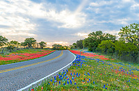 Found this out in the Texas Hill Country toward Fredrickburg as the skys had been stormy a small ray of heavenly sunshine came through and allows us to get this image of the bluebonnets and indian paintbrush blandket of wildflowers along this Texas road.