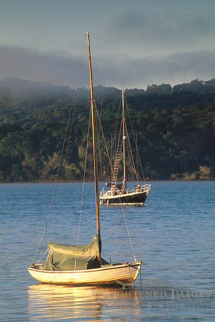 Morning light and fog over sailboats anchored in calm water tomales