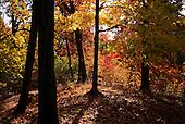 Fall Prospect Park 2014