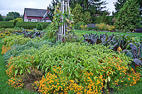 Potager plantings at the  formal garden in Experimental Farms in Ottawa, Canada