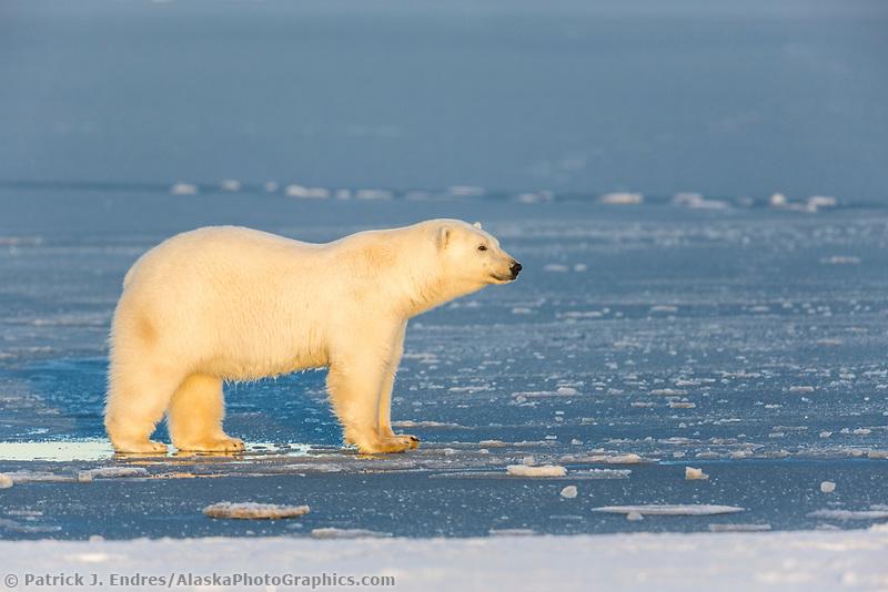 Beaufort Sea, Arctic National Wildlife Refuge, Alaska.
