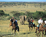 Africa. Kenya. Masai Mara. Horseback riders on safari run from a charging elephant. MR