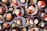 Fresh scallops for sale are seen at Chorrillos seafood and fish market in Lima, Peru, 31 March 2013.