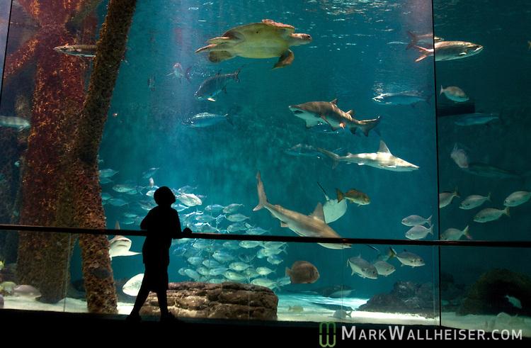 The Audubon Aquarium Of The Americas In New Orleans Mark