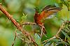 Neotropical Wildlife