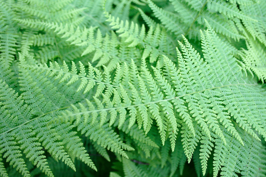 Green fern leaves detail