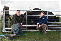BNPS.co.uk (01202 558833)<br /> Pic: PhilYeomans/BNPS<br /> <br /> Helen and Matt with the 600 kg Bull Yak.<br /> <br /> An enterprising farming couple have taken the unusual step of introducing the Himalayan Yak to the rolling fields of rural Cheshire.<br /> <br /> The fearsome looking bovid, more normally found in freezing temperatures on the tibetan plateau, has been introduced to Britain for the first time in an attempt to boost production in the dairy herd, as well as for the potential health benefits of its low cholestrol meat.<br /> <br /> Unlike domestic cattle the frisky Yaks can be left out in all weathers, happy dealing with temperatures as low as -40 - They also sport four foot wide horns, are very nimble on their feet and are quite capable of jumping a five bar gate if spooked.<br /> <br /> Helen and Matt Worth from Congleton are confidant their Yak breeding plans will catch on although it is unlikely the grunting of Yaks will replace the mooing of traditional cattle any time soon.