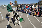 Oakland CA Representative from dairy association introducing innercity elementary school students to a calf