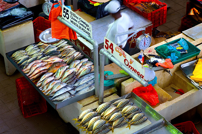 Fish vendor in his stall with his arranged fish at the Fish Market (El Mercado del Marisco) in the Casco Viejo neighborhood of Panama City, Panama.