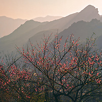 Vietnam Images-landscape-Flower-Nature-Sapa.