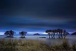 Trees in Lake Biwa, Shiga Prefecture, Japan
