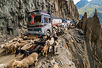 This image of sheep and goats being herded over the Zojila Pass as a traffic jam idles trucks because of a landslide; Kashmir, Jammu and Kashmir State; India won the grand prize in the worldwide Photoshelter Travel Photography competition in 2015. The image was also a selected winner to appear in the American Photography 32 annual award book. It has been used by a variety of media around the world including GEO France and Red Bull.