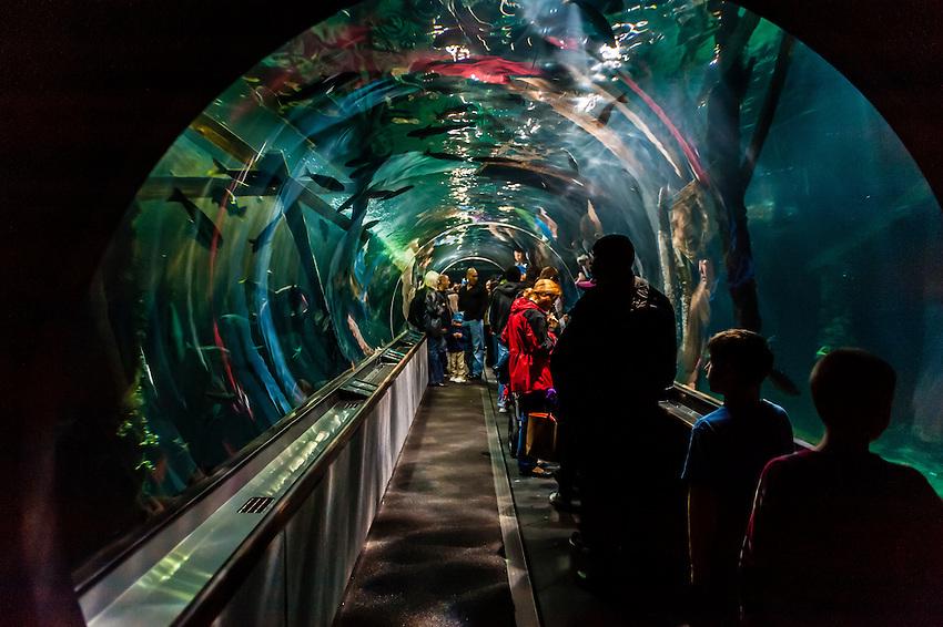 Aquarium Of The Bay Fisherman 39 S Wharf San Francisco