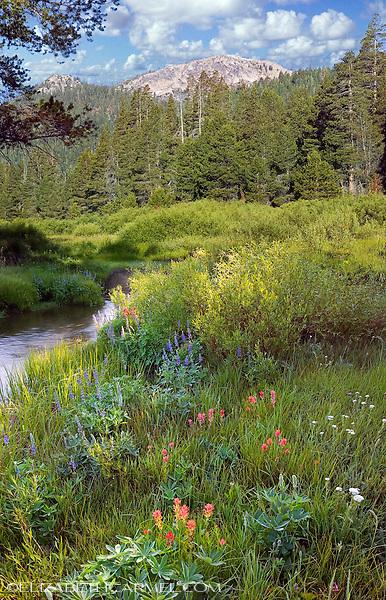 Euer Valley Wildflowers