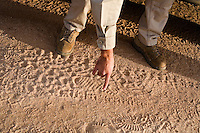 Border patrol agent John Bernal tracking footprints in the desert..Tucson, AZ.12/8/05.photos: Hector Emanuel