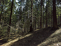 FOREST_LOCATION_90214