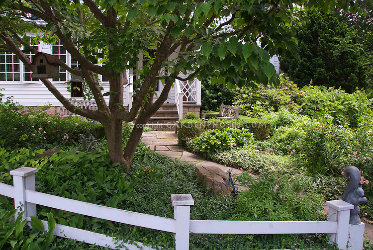 Hostas and Hellebores in shade under Dogwood tree with fence, house, pathway, Vinca, Buxus, bird house
