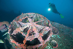HMCS Yukon, Mission Beach, San Diego, California; a scuba diver hovers over the HMCS Yukon wreck covered in colorful anemones