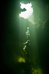 SCUBA diving in a cenote at Bacalar Chico National Park, Ambergris Caye, Belize