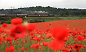 2012_06_12_BEWDLEY_POPPIES