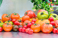 Tomatoes, various, heirloom, striped, cherry, yellow, green, brown, harvested, heirloom mixture