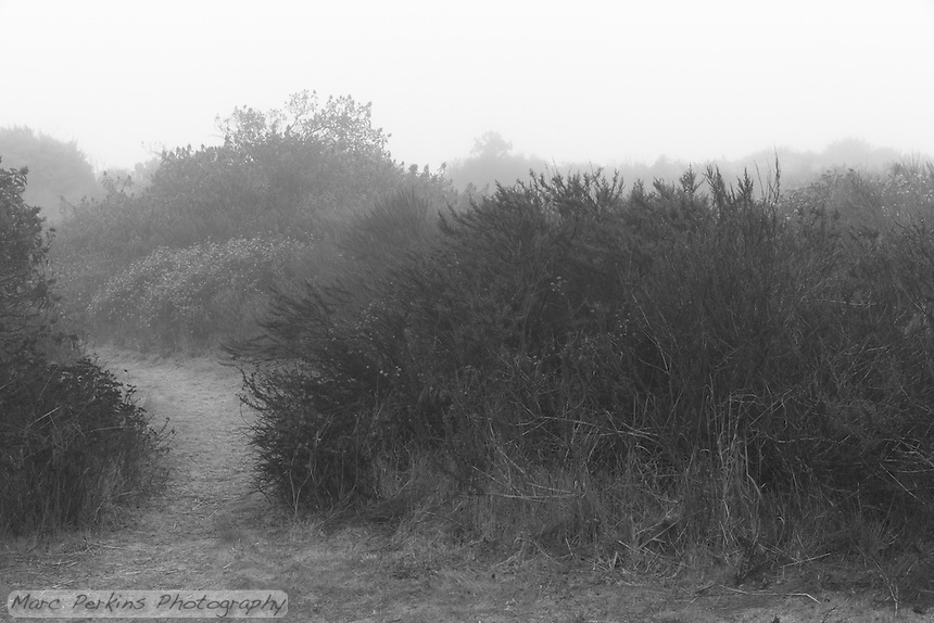 Mist on a foggy morning shrouds the trail as it passes through bushes in Crystal Cove State Park.