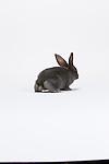 20150617 Beveren Rabbits