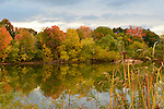 New York, USA. 23rd October 2013. Colors of autumn foliage start to arrive at pond with marsh cattails on North Shore of Long Island.