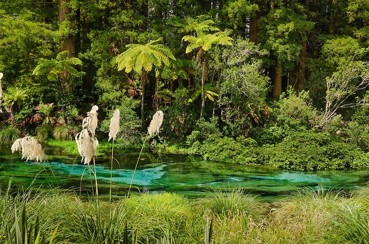 New Zealand Photos | Hanamura Springs, Rotorua, North Island, New Zealand - stock photo, canvas, fine art print