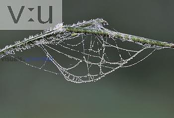 Dewy Spider web, Brazil.